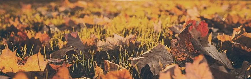 Efterårsmenu hos Oven Vande Ved Volden